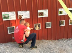 Farm Animal Feeding at Amazin' Acres of Fun!