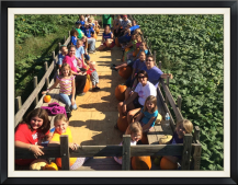 Take a hayride to pick the perfect pumpkin!