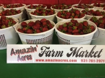 Best Strawberries in middle Tennessee